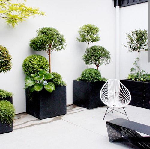 Alignement des pots avec des arbustes et buissons de for Arbuste deco jardin
