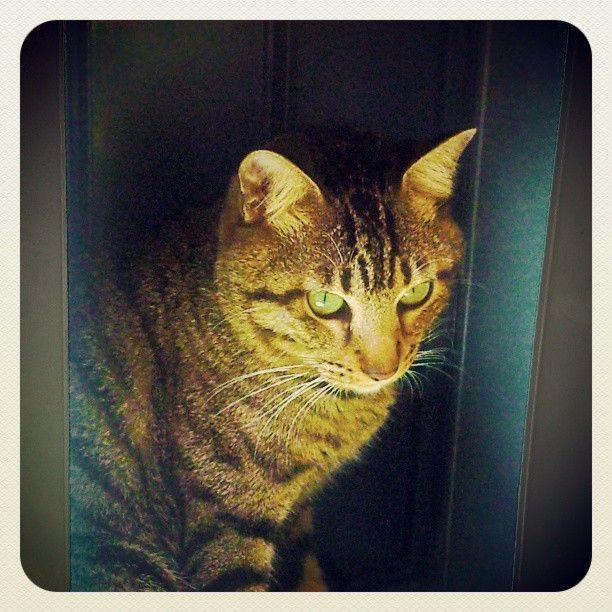My Cat Jandi - (Photo from the Instacanvas gallery of itok_del_mundo.)