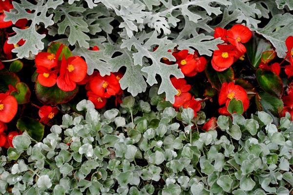 winterfeste pflanzen berstehen auch frostige temperaturen grabbepflanzung pinterest. Black Bedroom Furniture Sets. Home Design Ideas