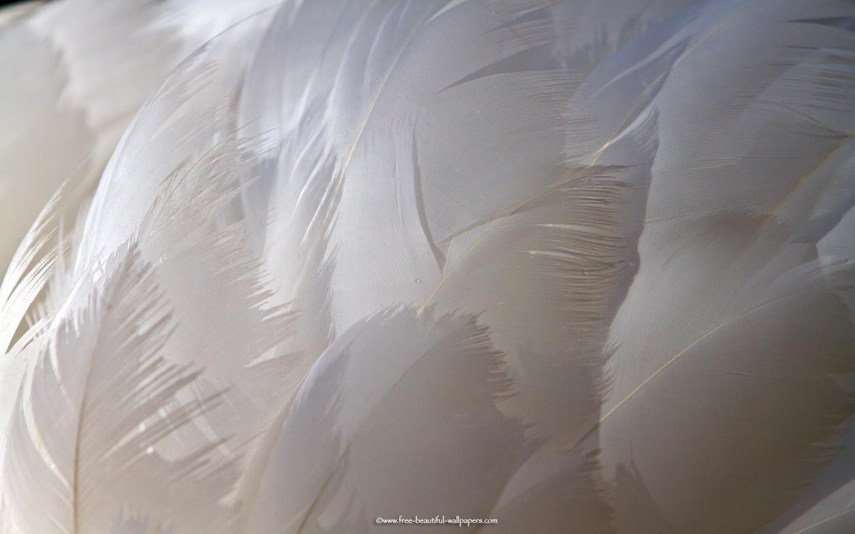 Картинка лебедей из пуха