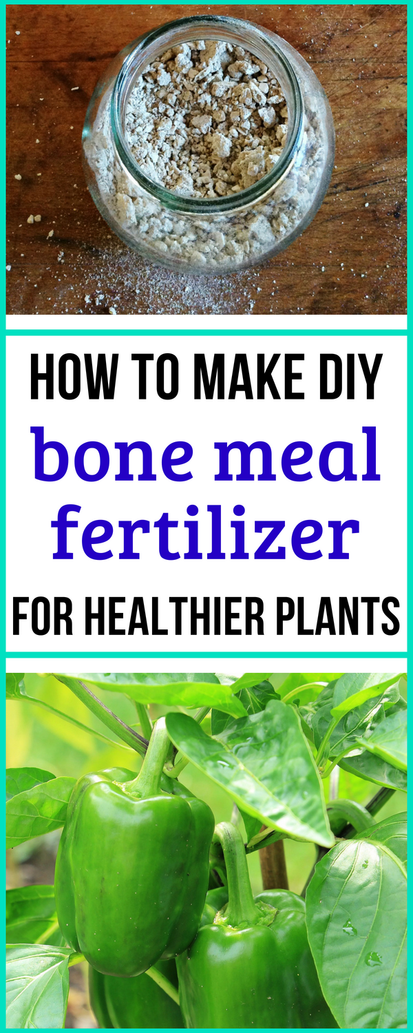 How To Make Bone Meal For A Better Garden With Images Organic