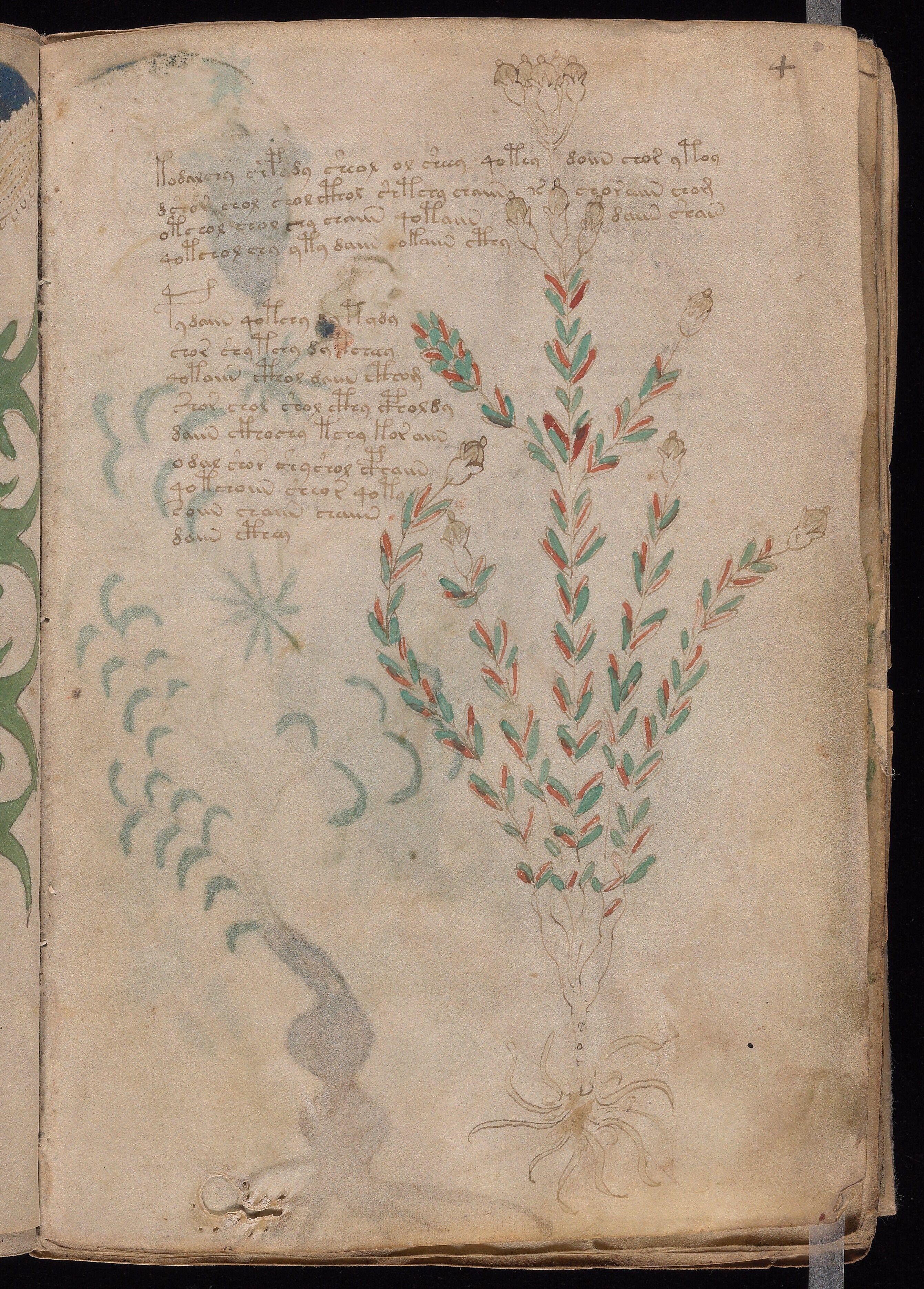 #VoynichManuscript | #CipherManuscript | Page 4 (1) | Original Pin Cormael Lia http://www.pinterest.com/cormaellia/voynich-manuscript/