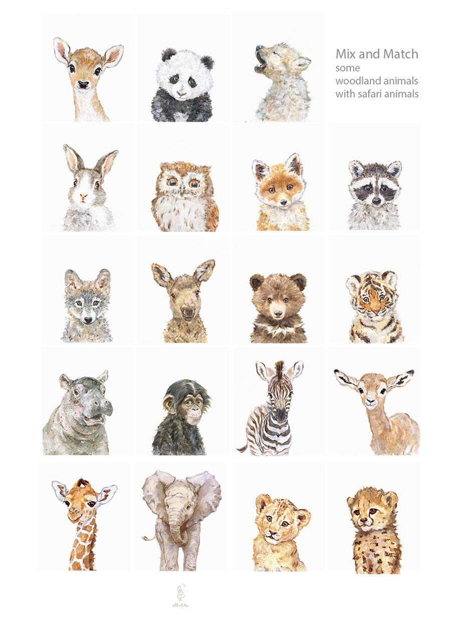 Wild Baby Animals Portrait Set of 6, Woodland Nursery Art, Woodland animals print set, Animal prints for nursery, Giclee, Deer, Bear, Fox #cuteanimalphotos