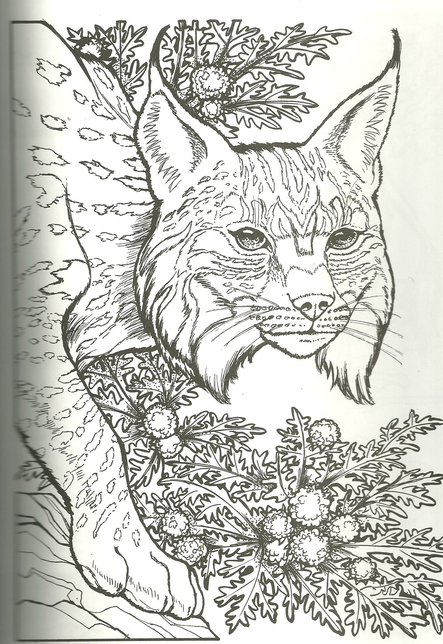 Bob Cat Coloring Pages Coloring Books Animal Coloring Books Disney Coloring Pages