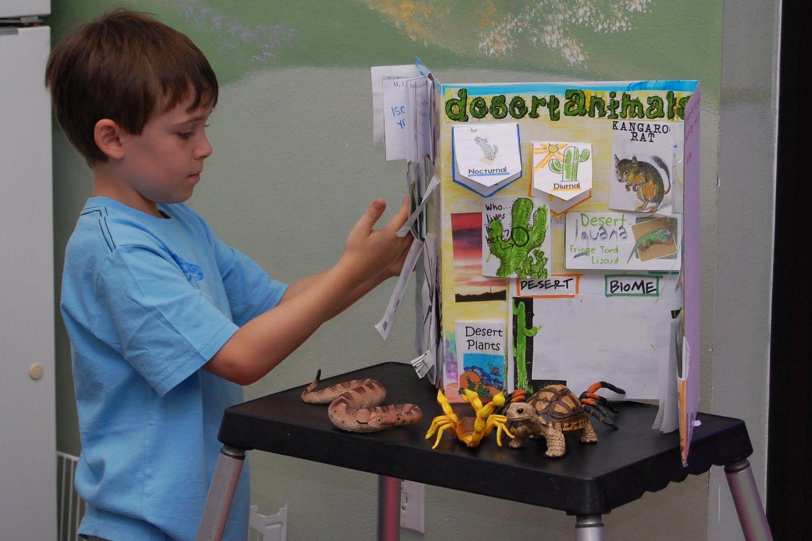 Desert biome project display LIFE SCIENCE Animal