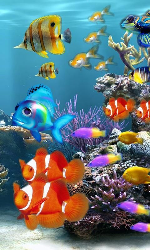 Iphone X Wallpaper Coral Reef Download Live Aquarium Wallpaper For Mobile Gallery In