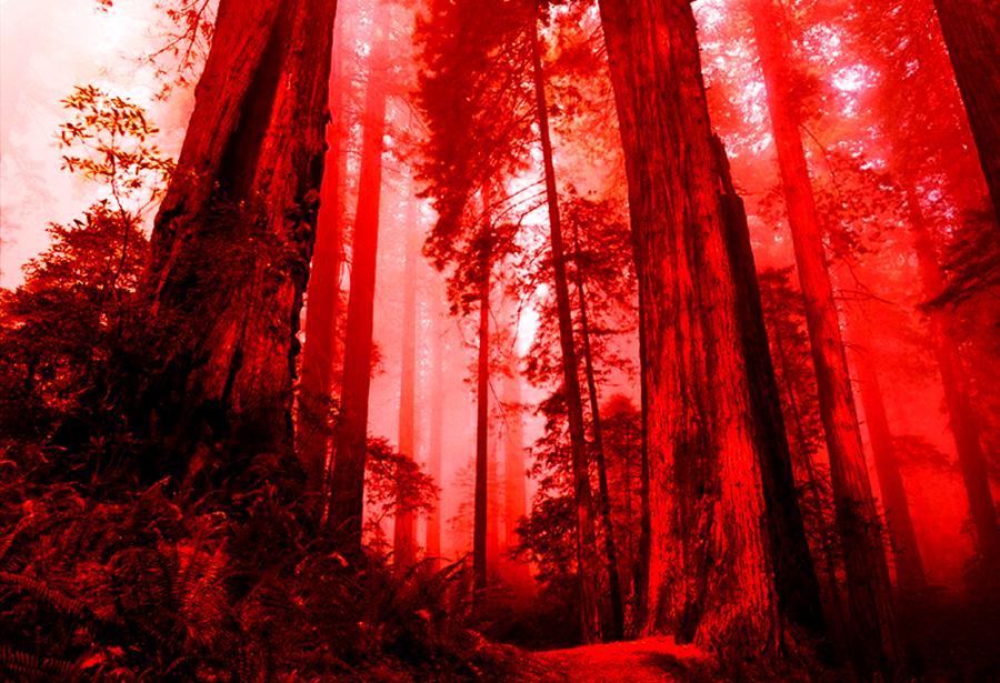 Картинки с кровавыми лесами