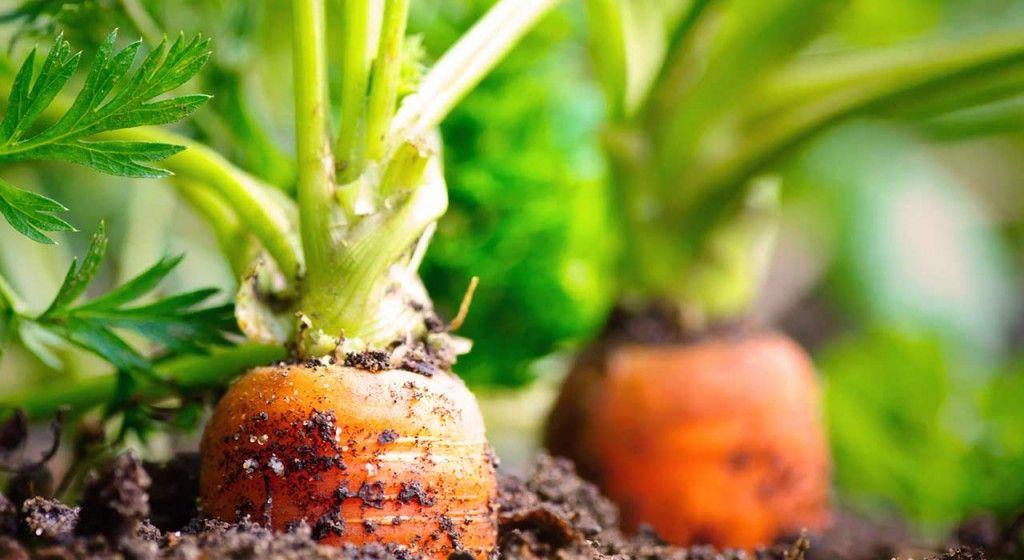 Der Gemüsegarten im Schatten: Welche Nutzpflanzen gedeihen ...