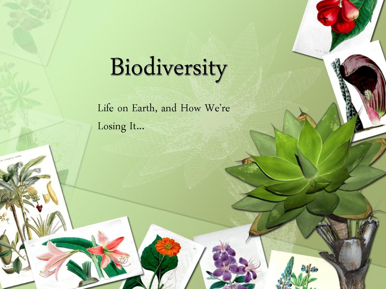 Biomes And Biodiversity