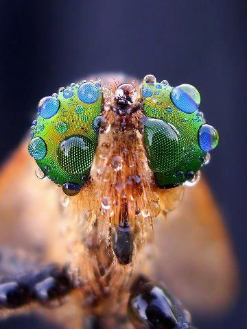 Images For: 10 Most Impressive Photos of Bug
