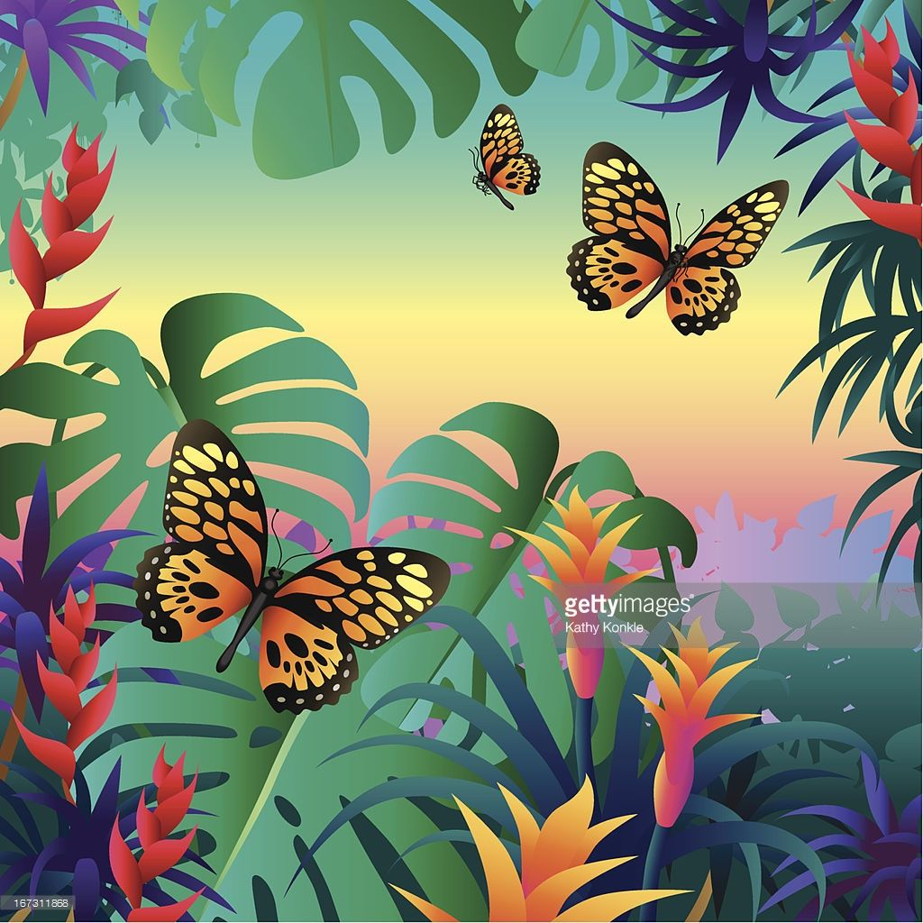 Vectorkunst : rainforest butterflies