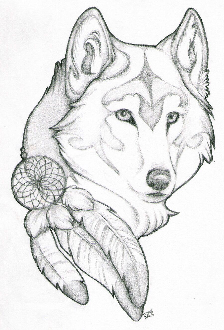 Lobo Con Plumas De Tocada De Cacique Mas Cerca Del Concepto Para