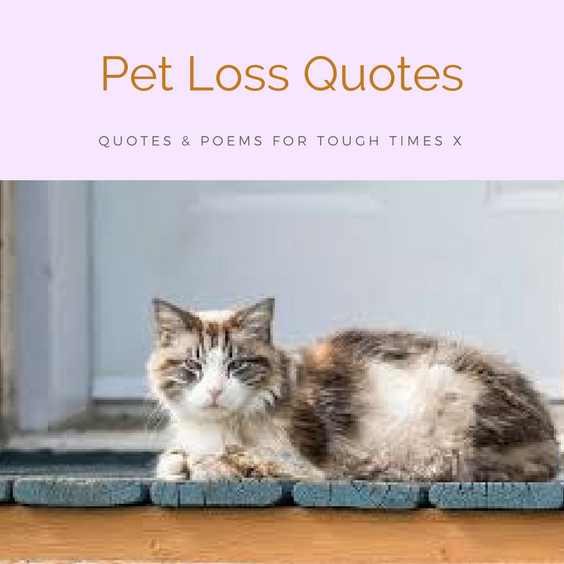 poems and quotes for loss of pets - cats dogs best friends