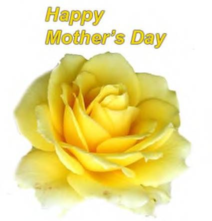 To Mothers Everywhere Happy Mother S Day Yellow Rose Flower Flowers Perennials Yellow Roses