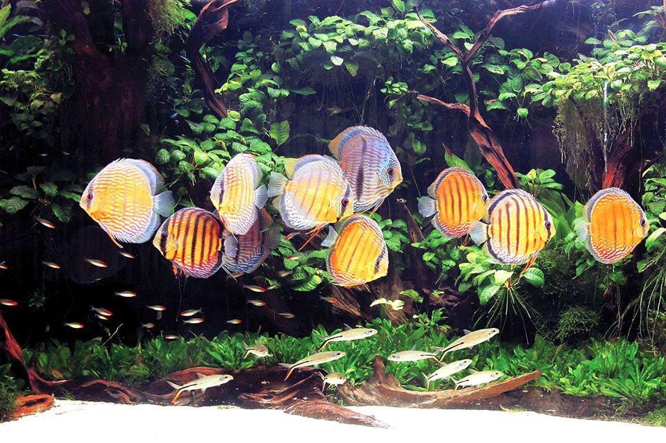 Aquapress - Heiko Bleher's photo.