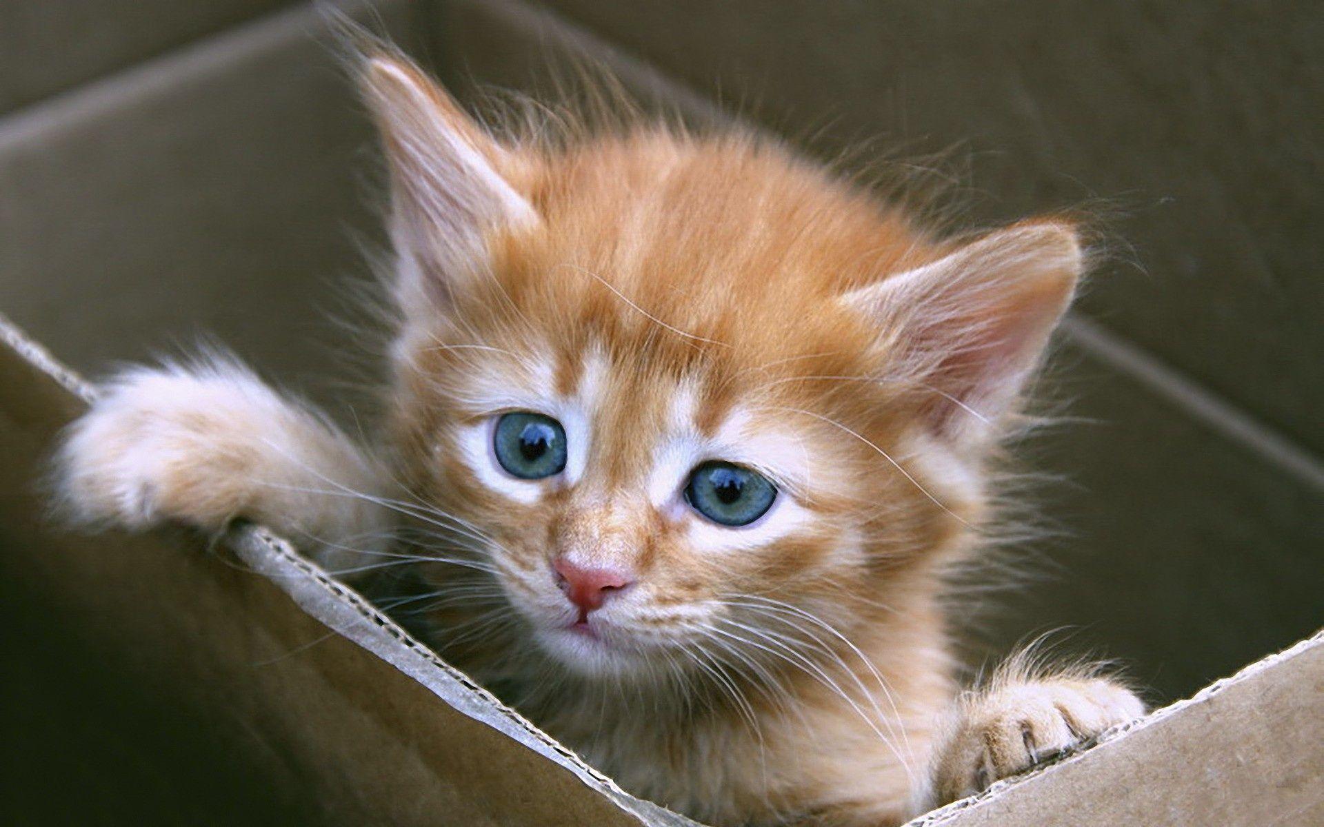 Www Google Com Cats And Kittens Kitten Kittens Cutest