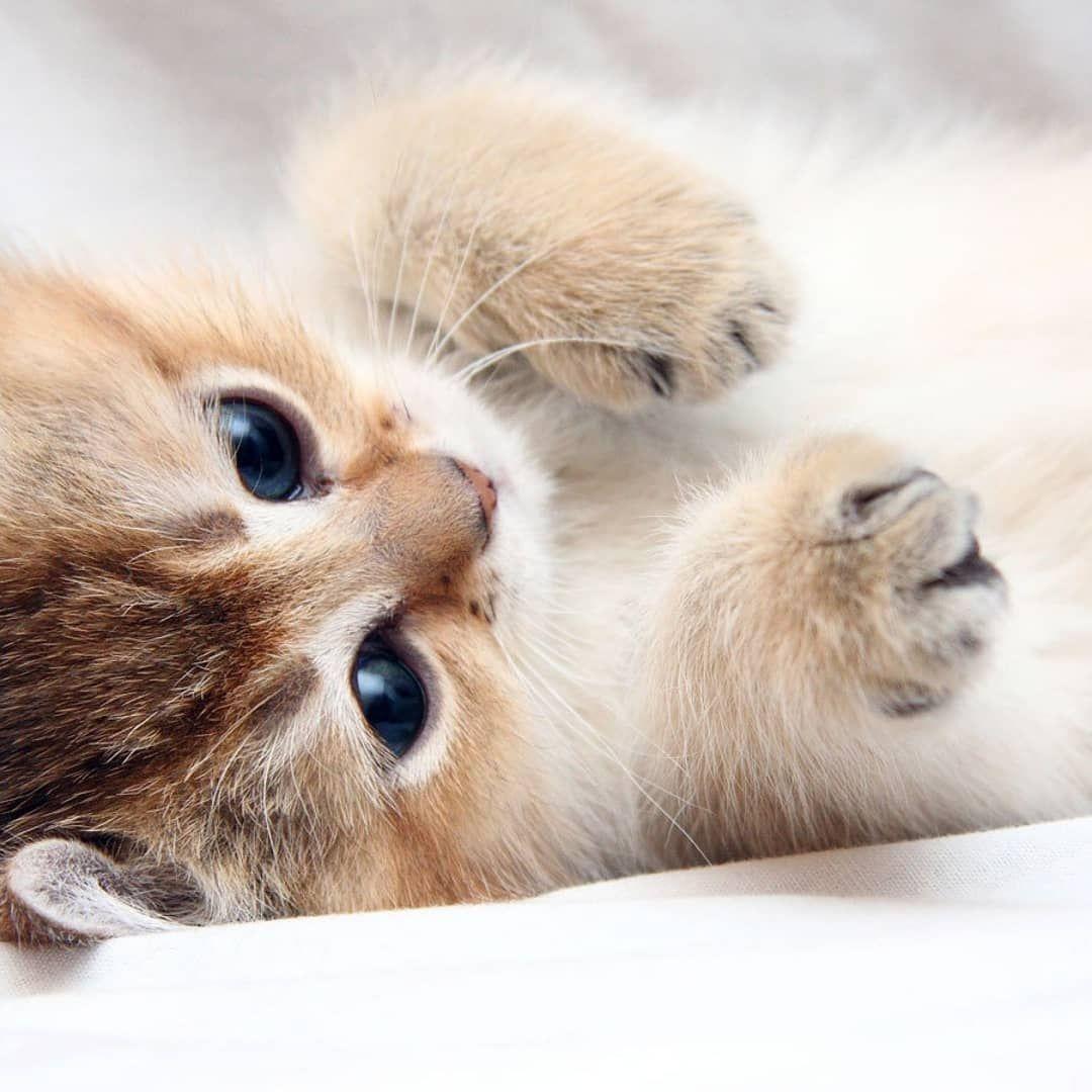 Cat Cats Cutecat Awwwwww Cute Cat Wallpaper Cats Kitten Images