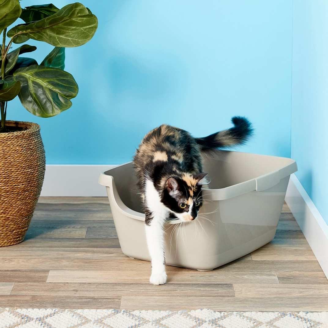 The Best Cat Litter, According to Vets Best cat litter