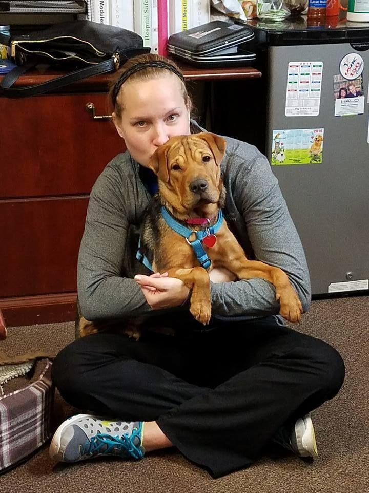 Home Veterinary clinic, Veterinary, Janesville