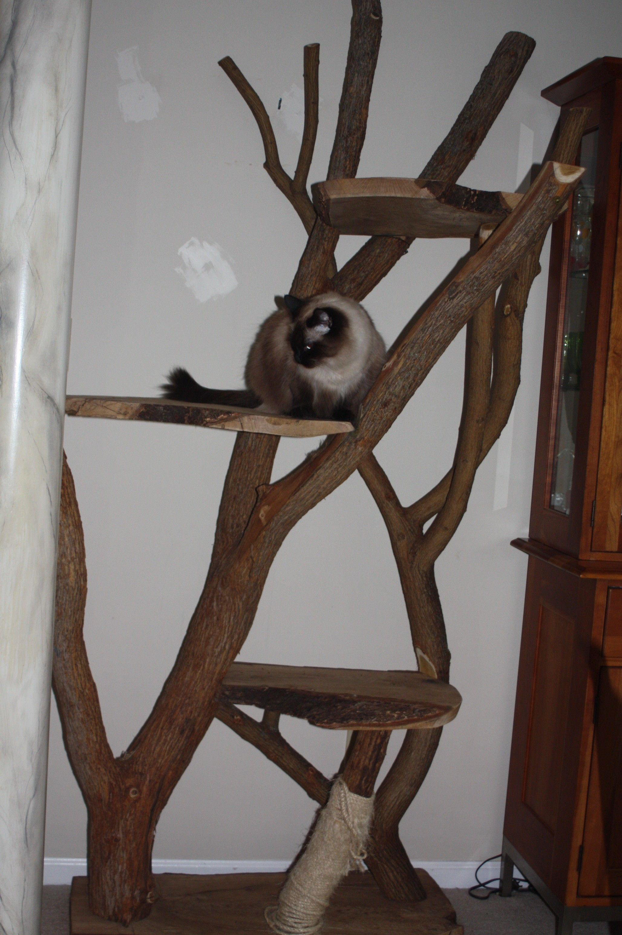 Adorable design ideas of unique cat trees with brown bole and solid wood perch also scratching post with make cat scratching post and mod cat furniture