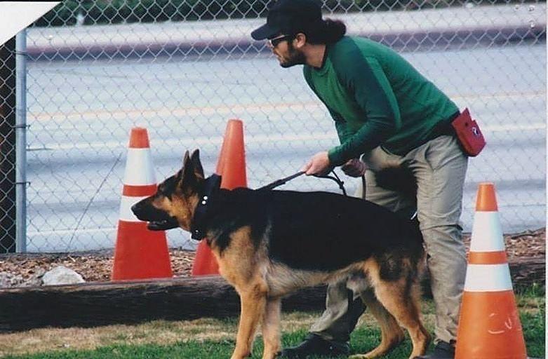 Puppy training camp nyc