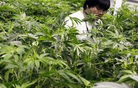France Allows Use of Marijuana-Based Medicines