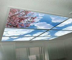 panel ventana techo