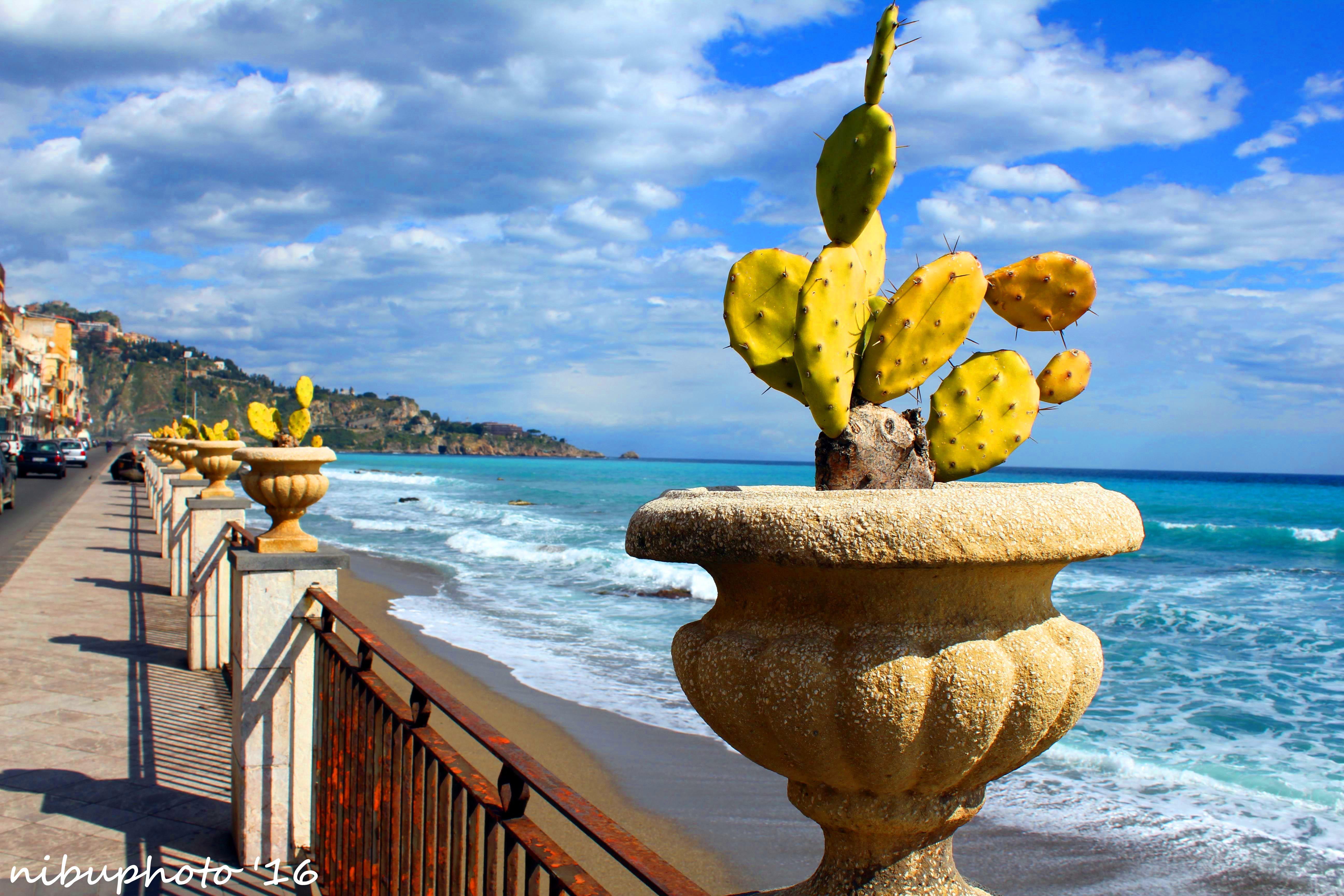Pin su Mare di Sicilia