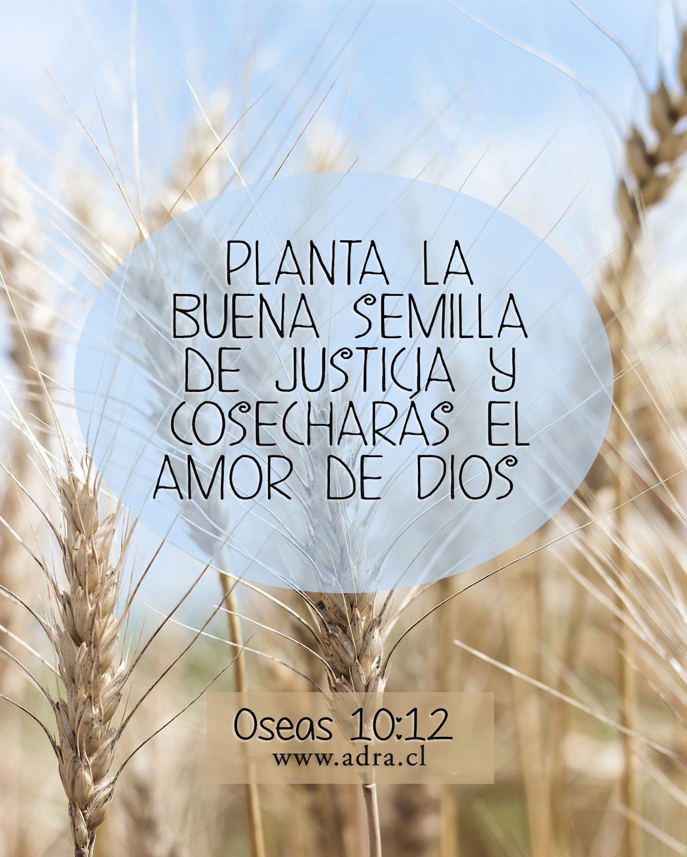 Oseas 10:12 #versiculo #biblia