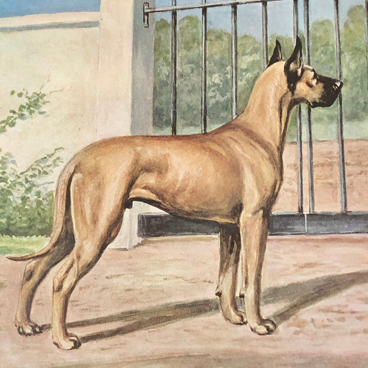 Great Dane Dog Print Dog Print Vintage Dog Vintage Ephemera