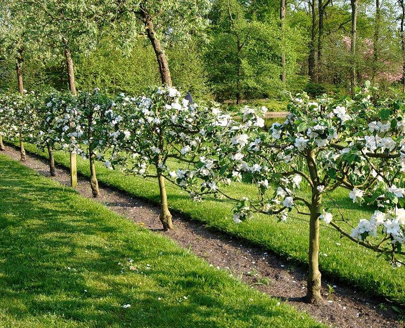 как правильно посадить фруктовый сад фото доступности обучающих курсов