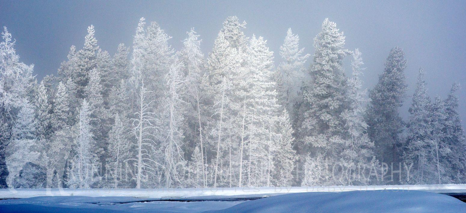 Yellowstone Area Landscapes Winter Landscape Winter