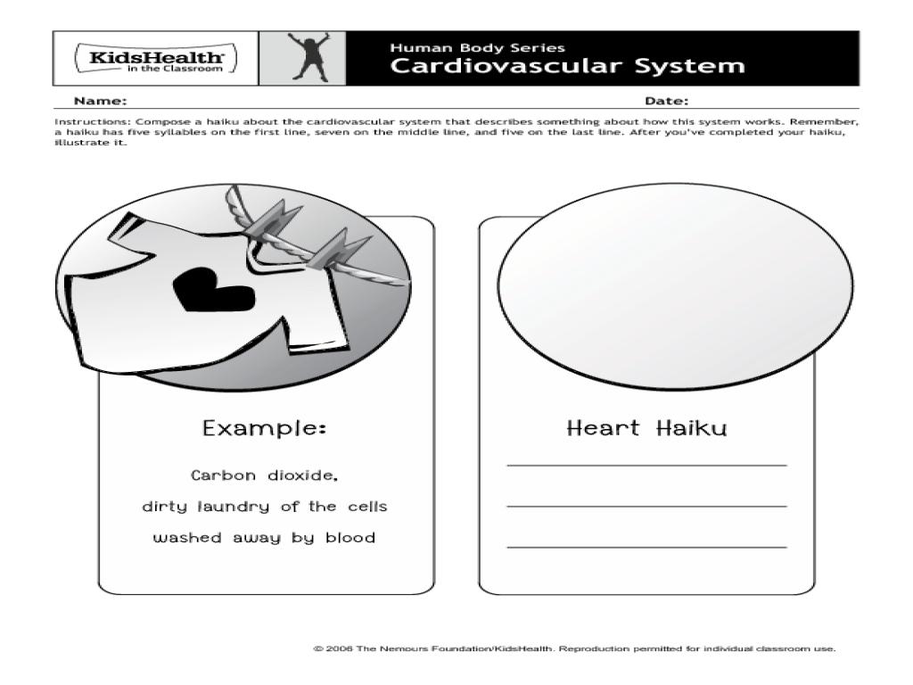 Cardiovascular System Lesson Plan