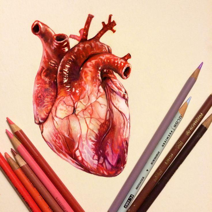 Real Heart Drawing real heart illustratio...