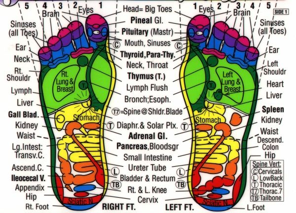 picture relating to Printable Reflexology Chart titled Free of charge Printable Reflexology Charts Reflexology Chart for