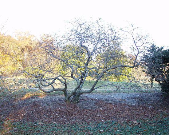 Winter Magnolia Tree Tree Magnolia Trees Winter Trees