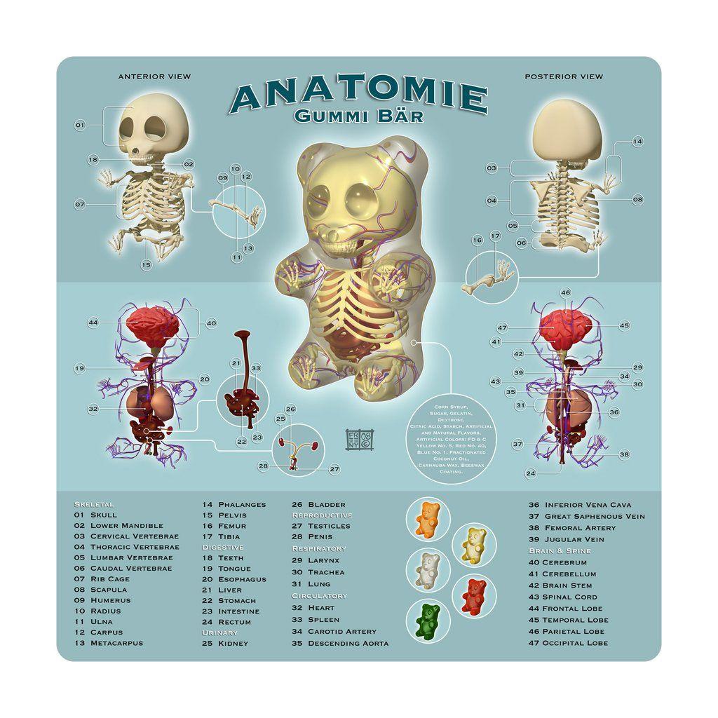 Anatomie Gummi Bar Print