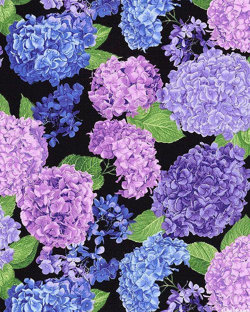 Hydrangea - Elizabethan Blooms - Quilt Fabrics from www.eQuilter ... : hydrangea quilt fabric - Adamdwight.com