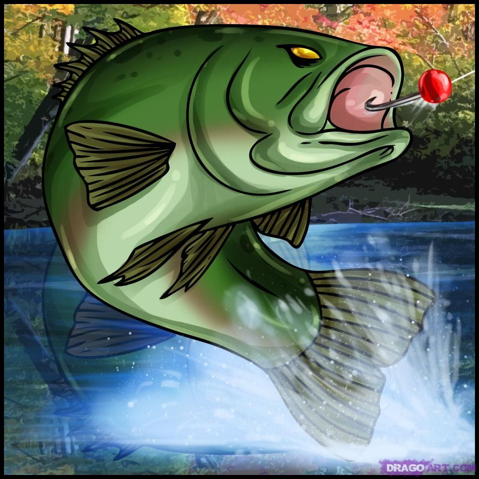 how to draw a bass fish what to eat pinterest drawings