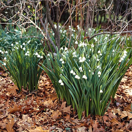 Captivating Fill Your Garden With Beautiful Bulbs That Bloom In Spring, Summer, And  Fall.