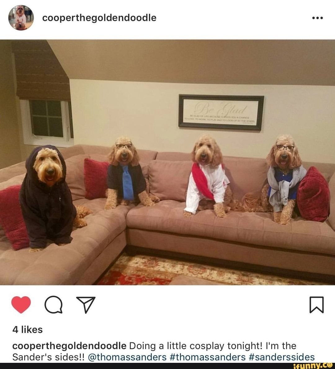 Cooperthegoldendoodle 4 Likes Cooperthegoldendoodle Doing A Little Cosplay Tonight I M The Sander S Sidesll C Thomassanders Thomassanders Sanderssides Ifu Sanders Thomas Sanders Sander Sides