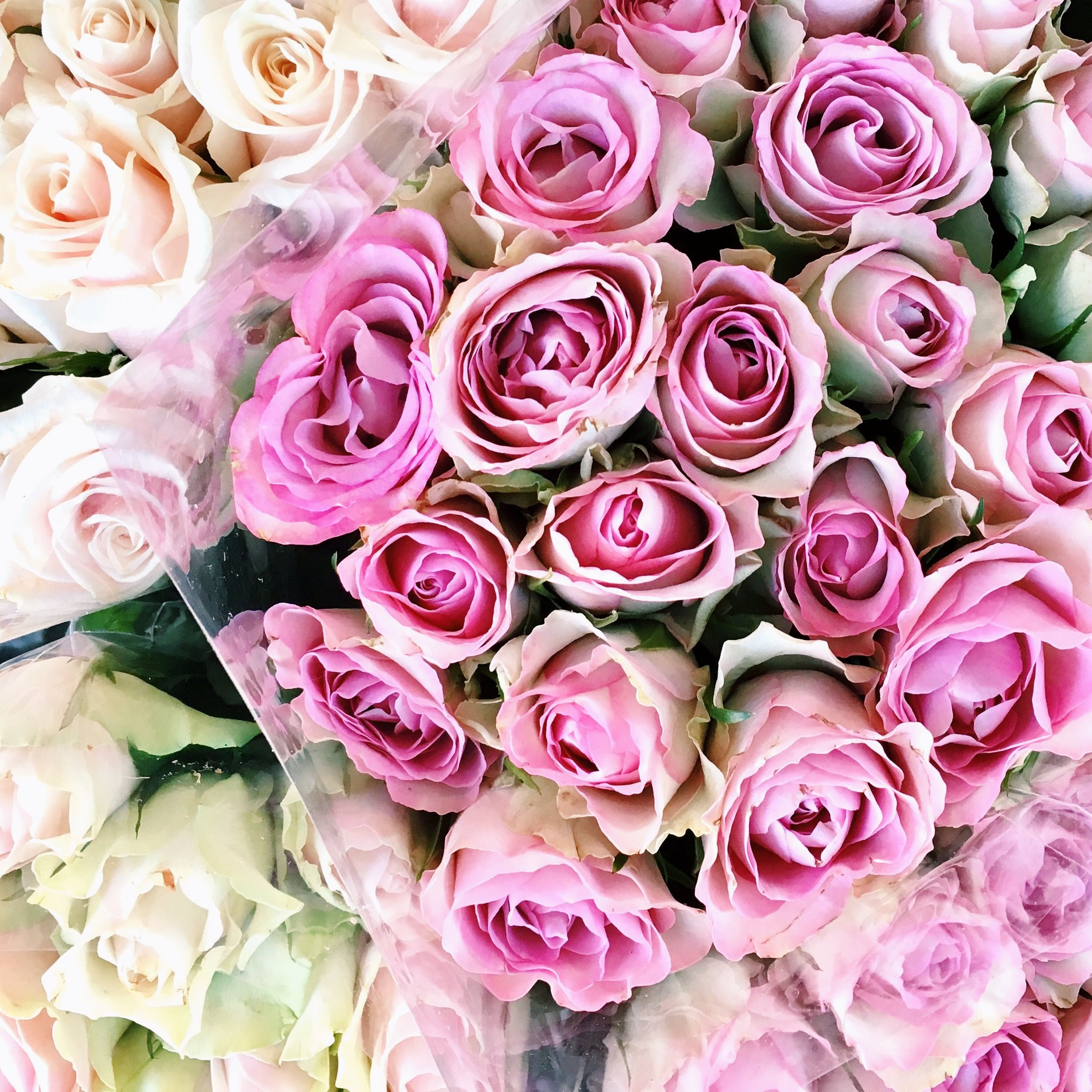 Pin by Matylda Gombrych on Flowers Pinterest Flowers