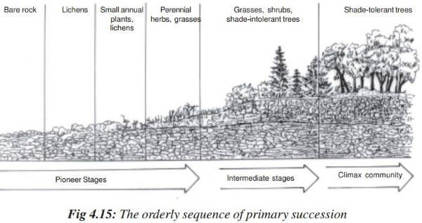 Ecological succession  primary secondary homeostasis also rh pinterest