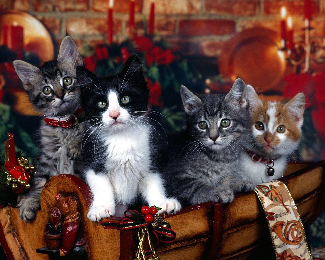 Christmas Gift Basket Of Kittens 1280 1024 Christmas Kitten Christmas Animals Christmas Cats