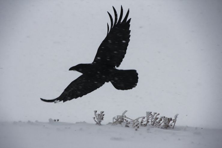 Into the Storm - Raven - Wy'East