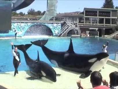 Espectacular número en el SeaWorld San Diego