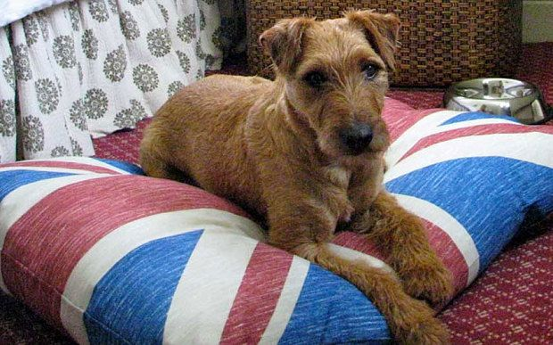Top 10 The Best Pet Friendly Hotels In Britain Telegraph