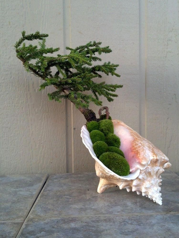 Pin On Bonzai Tree