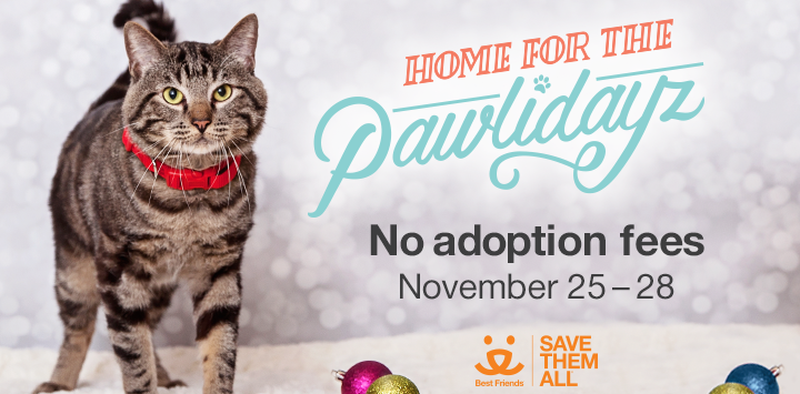 Zappos Home for the Pawlidayz Help homeless pets, Best