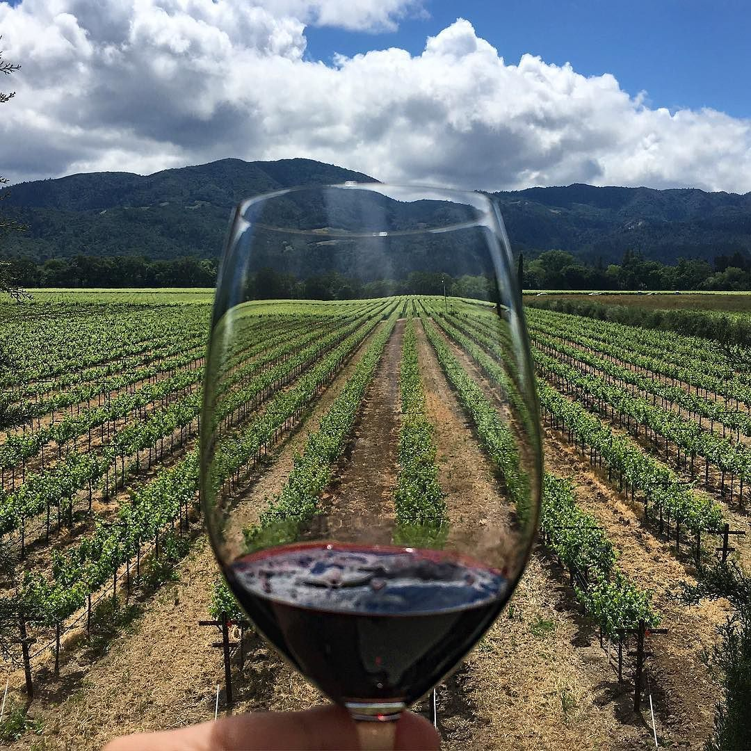 """""""It's for Jack.""""     : 2013 Rutherford Cabernet Sauvignon and views for days @RoundPondEstate    : The key to getting away with anything is saying its for your one-year old son  #JacksBoat #JacksVineyard #Napa #vineyards #CheekyEats . . . . . #Wine #cab #cabernet #cabernetSauvignon ##vino #drinksintheair #GlooByFood #huffposttaste #foodwinewomen #vscocam #GoodEatsChicago #foodiechats  #yougottaeatthis #talkfoodietome #thefoodspotter #foodgasm #foodilysm  #FoodGloriousFood #eatingfortheinsta…"""